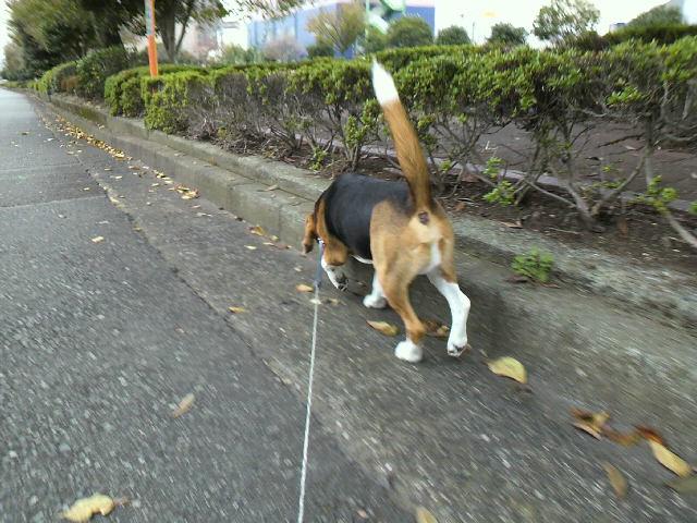 散歩に始まり散歩に終わる