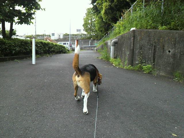 雨が降る前に散歩