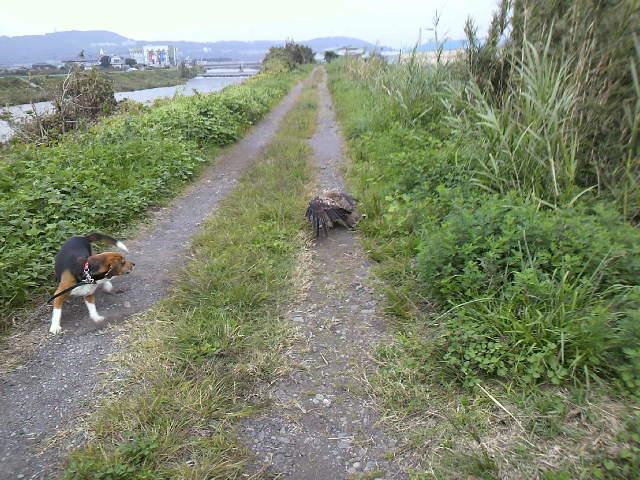 散歩の途中の出来事