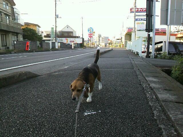 朝一の散歩